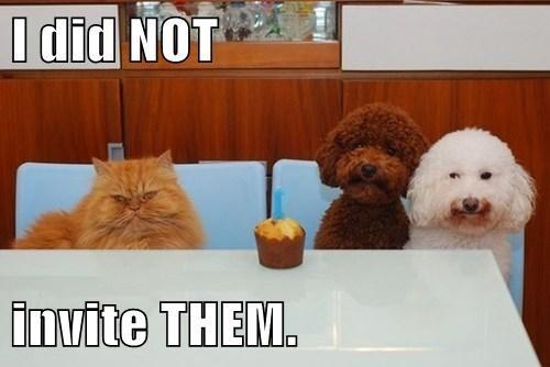 dogs cupcakes parties - 7909388288