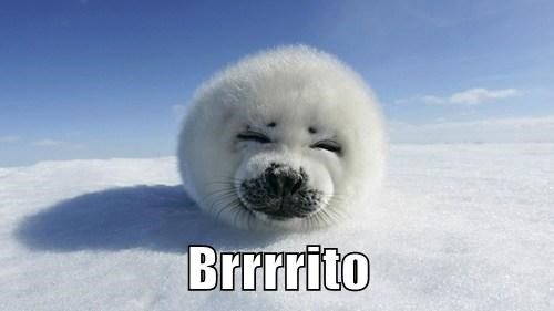 snow,burrito,cold,puns,cute,baby seals