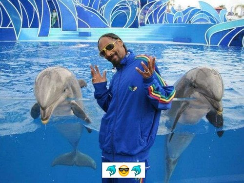 dolphins,emoji,snoop dogg