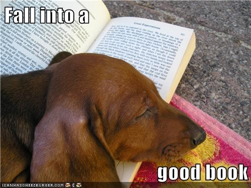 dogs reading summer puns sleeping - 7909896192