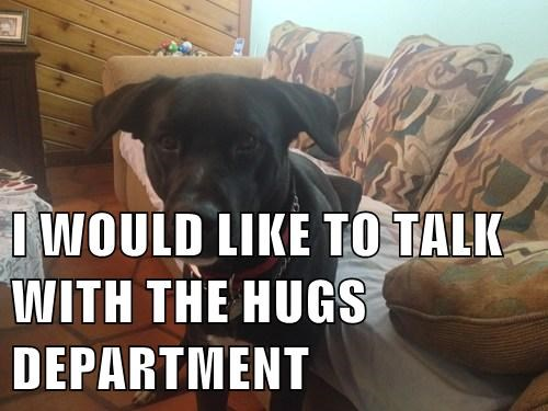cute dogs hugs quota report - 7909911296