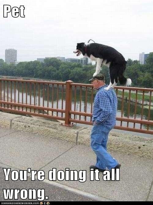 dogs funny walk pet weird - 7909924864