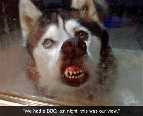 bbq dogs dinner hungry funny smell view - 7910215424