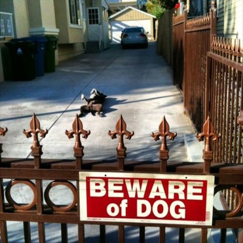 beware of dog funny signs - 7910221824