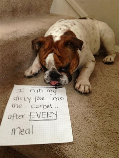 food dirty dogs carpet manners napkin polite pet shaming