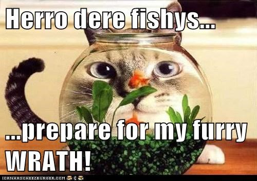 magnifying glass,fish,Cats,funny