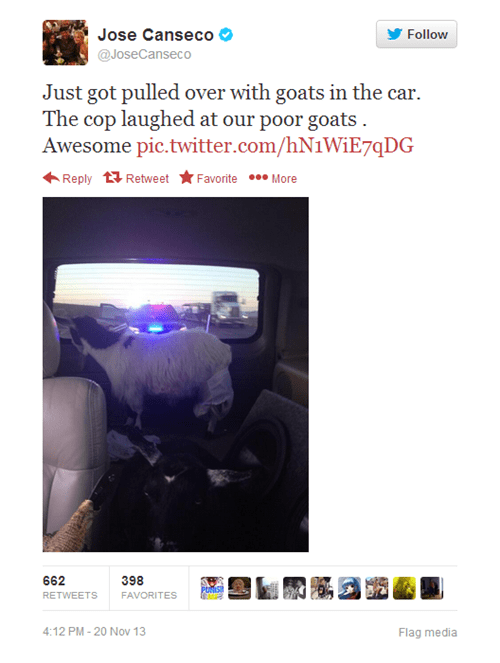 goats,traffic stop,speeding ticket,jose canseco,failbook