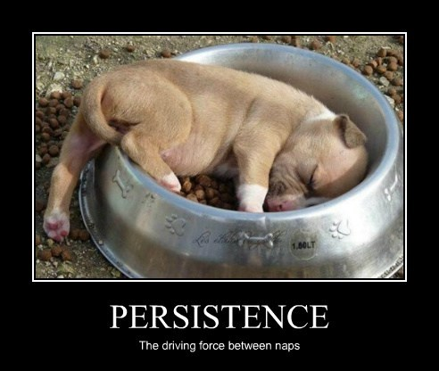PERSISTENCE The driving force between naps