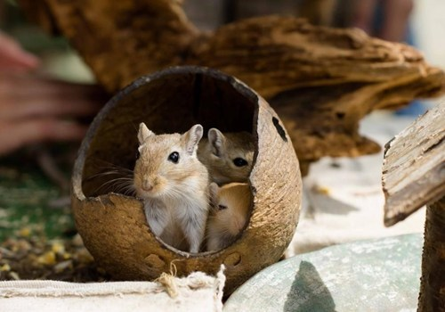 coconuts cute hut mice