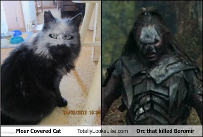 Cats flour Lord of the Rings orcs totally looks like