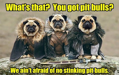 dogs Game of Thrones pugs