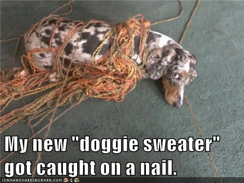 dogs sweaters - 7912117248