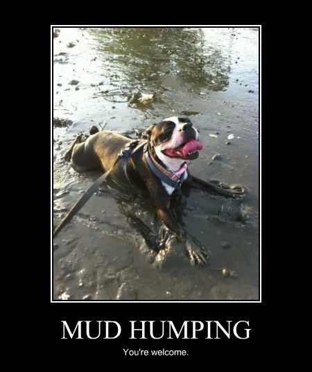MUD HUMPING You're welcome.