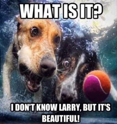 ball dive swim tennis ball pool treasure toy water - 7913344000