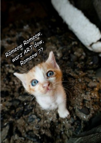 kitten romeo and juliet shakespeare - 7913393408