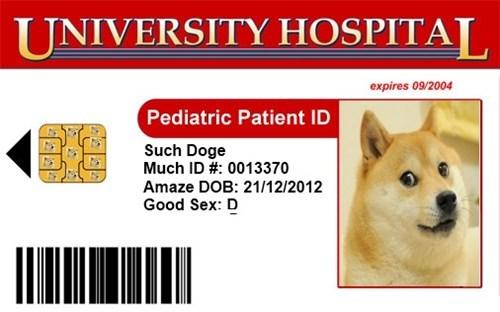 job,hospital,doge