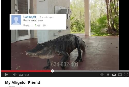 alligator animals youtube comments - 7913472256