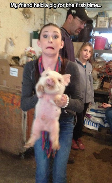 cute,farm,funny,piglets,pig,scared