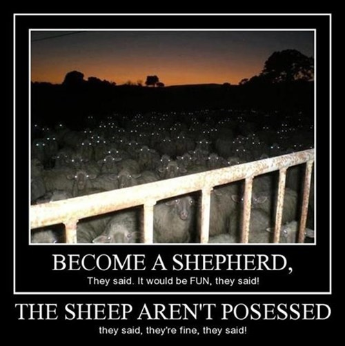 overwhelmed,scary,sheep,possessed