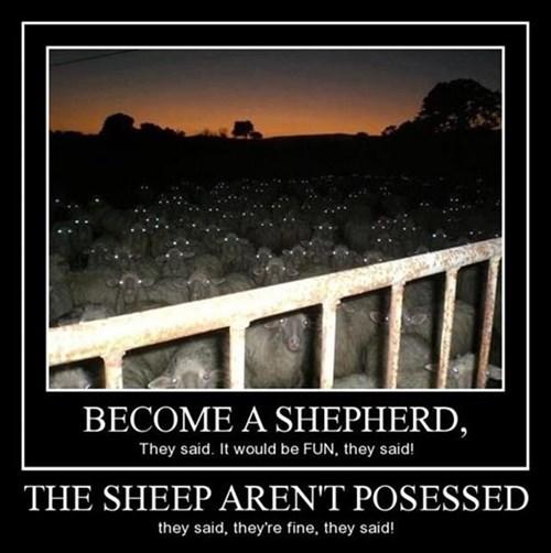 scary sheep - 7913567488