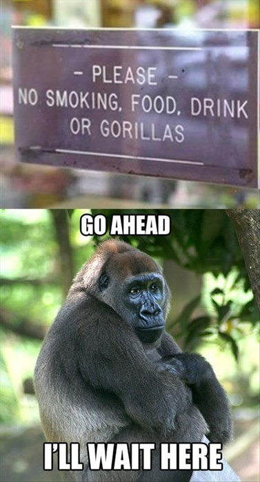 patience,gorillas,signs