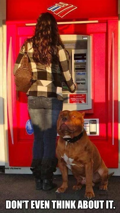 ATM dogs security protect tough