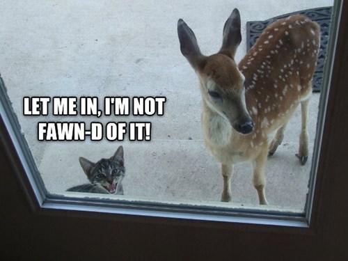 Cats cute friends fawn kitten - 7913600000