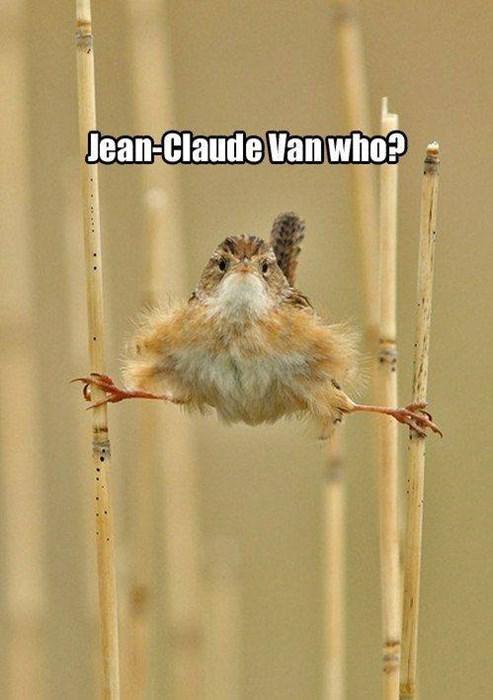Bird - Lean-Claude Van who? . এ