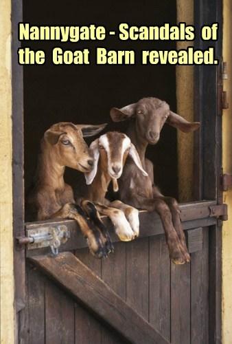 goats puns watergate funny - 7914511360