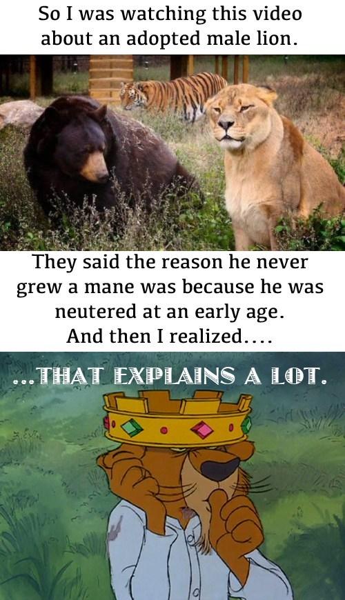 disney,lions,robin hood
