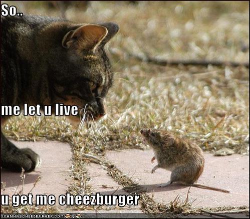 Cheezburger Image 791487744