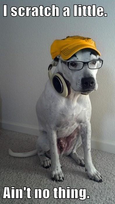 dj dogs fleas puns scratch - 7915324160
