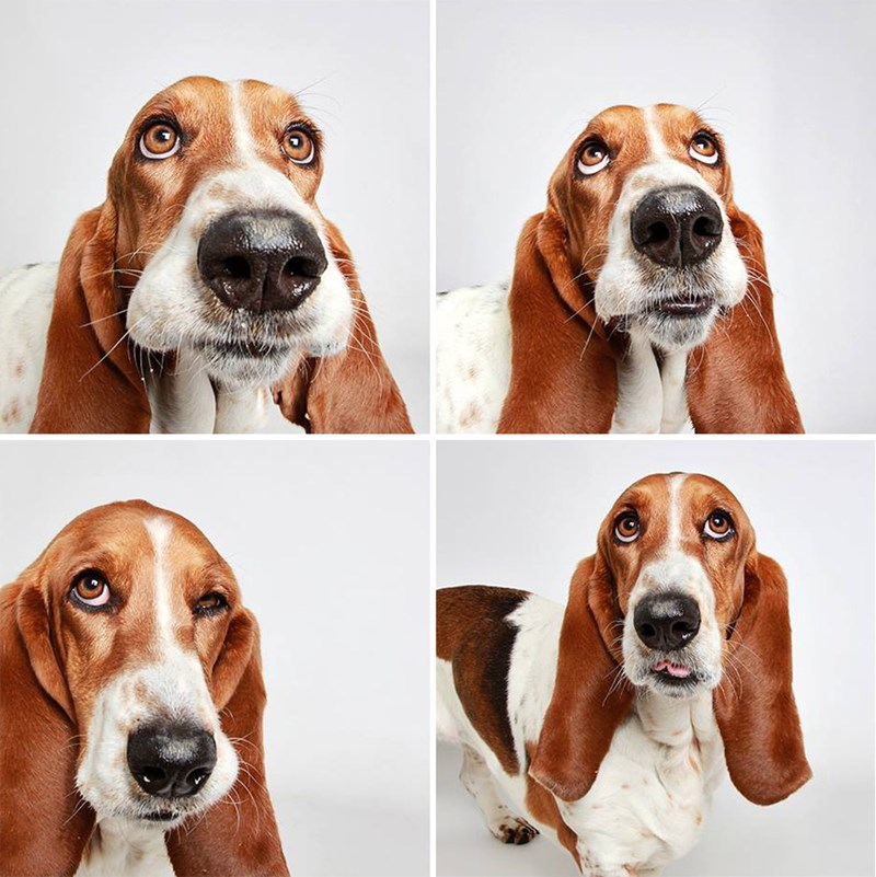 adopt shelter photobooth personality - 791557