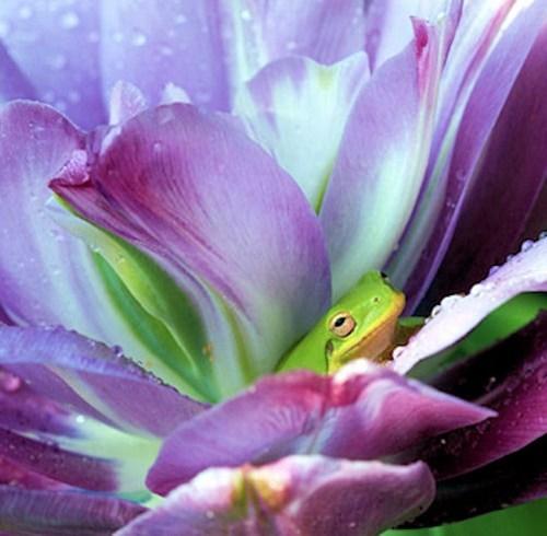 cute flowers frogs squee - 7915903744
