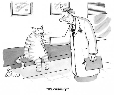 curiosity Cats funny web comics - 7915936256