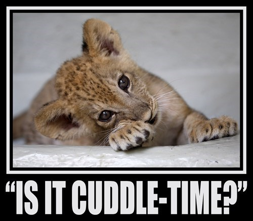 Babies cuddle cute big cats - 7916441344