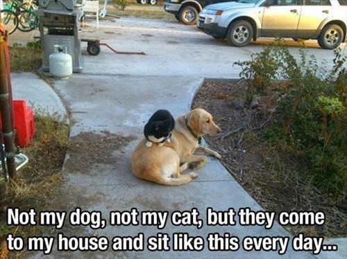 Cats dogs friends funny stunts - 7916526336