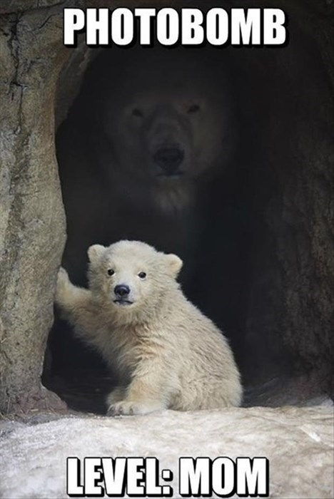 baby,cute,cubs,polar bears,mom,photo bomb