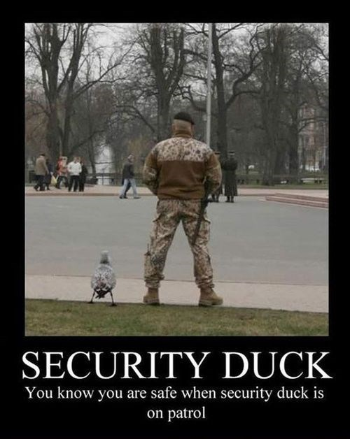ducks,demotivators,security duck