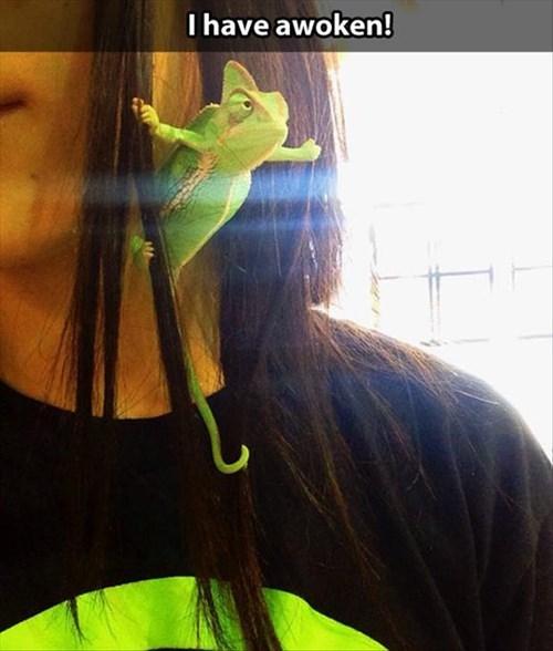 chameleons funny godzilla lizards - 7916538112