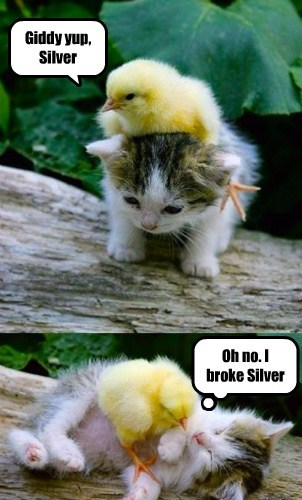cute chicks friends kitten parody - 7916550400