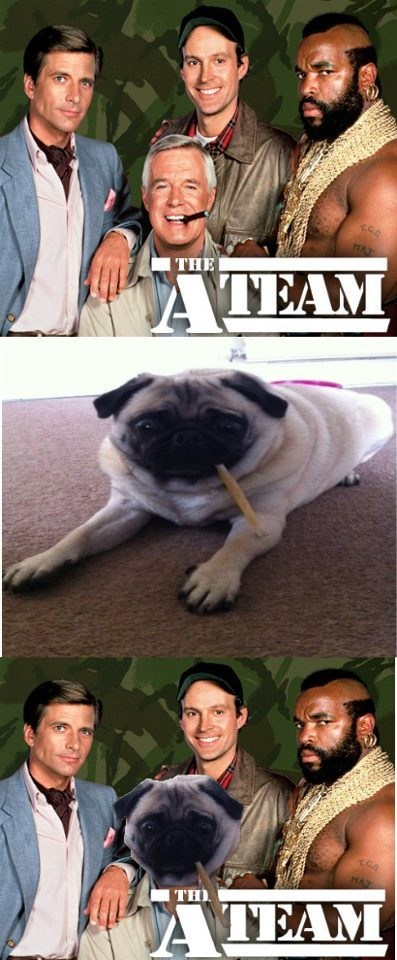 dogs,the a-team,pugs