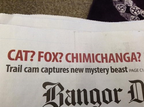 chupacabra,chimichanga,spelling,news headlines
