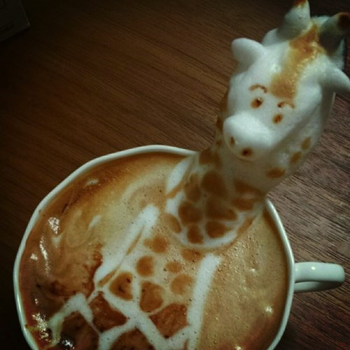 coffee funny latte art giraffes - 7916595200