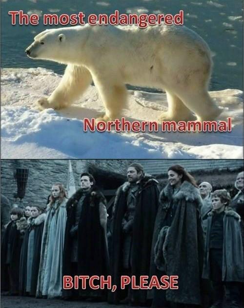 Game of Thrones,endangered,polar bear