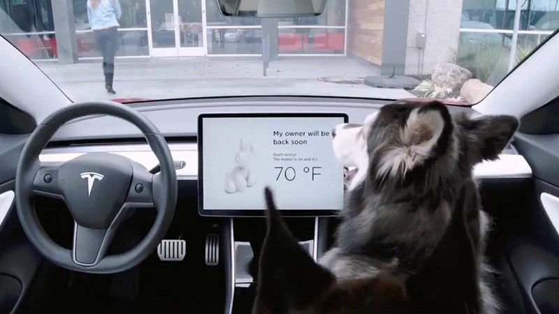 dogs Heat pets cars tesla - 7917317