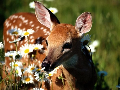 cute deer flowers does spring - 7918169088