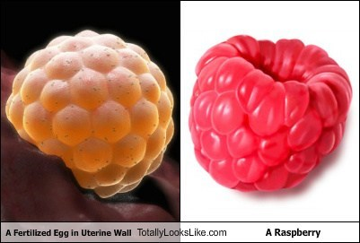 raspberries,eggs,totally looks like