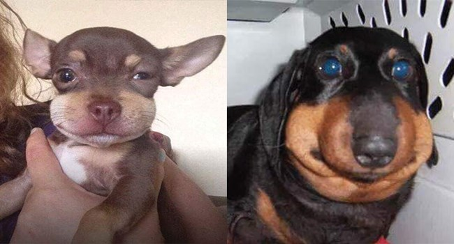 pictures of dogs bitten by bees AKA flying jalapeno raisins