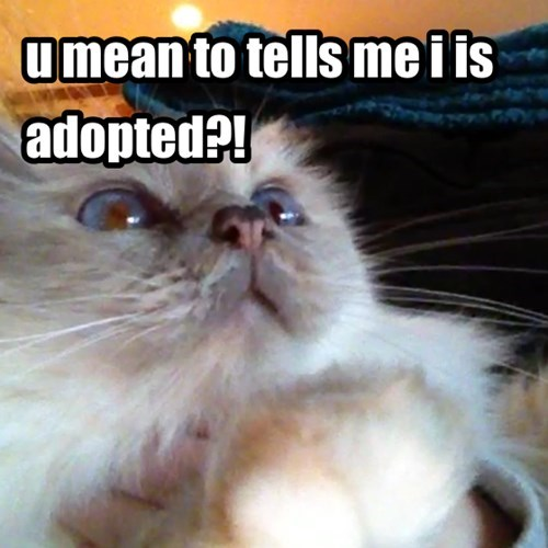 adopted Cats cute surprised - 7918682624